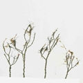 Wire Foliage Trees - Dry Leaves