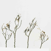 "WS00312 : Wee Scapes Dry Leaf Trees 1.5"" x 3"" 24-Pack"