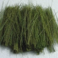 Field Grass Groundcover - Light Green
